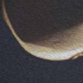 Модульная картина Династия 06-053-04 Ракушки