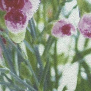 Модульная картина Династия 06-087-06 Букет гвоздик