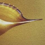 Модульная картина Династия 06-003-01 Золотой песок